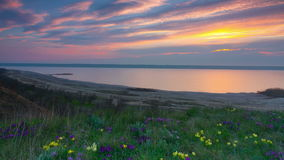 Iris violetas y amarillos en el prado almacen de metraje de vídeo