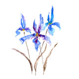 Iris. Watercolor illustration of Iris flower Stock Image