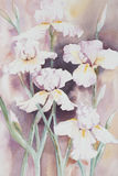 Iris Watercolour blanche Photographie stock