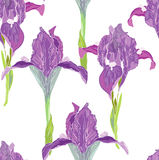 Iris on white Stock Photos