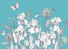 Iris, wilde bloemen en insectenschets royalty-vrije illustratie
