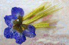 Iris y centeno Fotografía de archivo libre de regalías