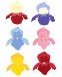 Irisachtergrond Royalty-vrije Stock Afbeeldingen