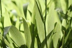 Irisblätter Lizenzfreies Stockbild
