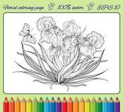 Irisbloemen en een vlinder in een kader Stock Afbeeldingen