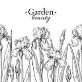 Irisblomma- och sidagränsteckning Dragen inristad blom- sömlös modell för vektor hand Royaltyfri Bild
