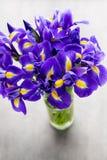 Irisblume auf dem grauen Hintergrund Lizenzfreies Stockbild
