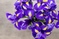 Irisblume auf dem grauen Hintergrund Stockfoto