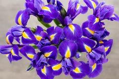 Irisblume auf dem grauen Hintergrund Stockfotografie
