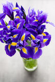 Irisblume auf dem grauen Hintergrund Stockfotos