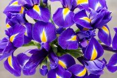 Irisblume auf dem grauen Hintergrund Lizenzfreie Stockfotografie