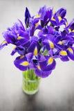 Irisblume auf dem grauen Hintergrund Stockbilder