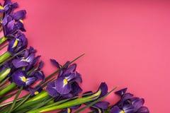Irisblumen auf einem rosa Hintergrund stockbild