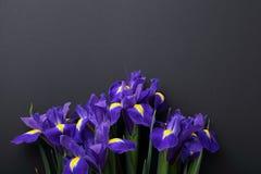 Irisblumen auf schwarzem Hintergrund Lizenzfreie Stockfotografie
