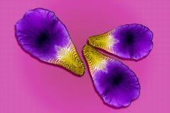 Irisblumenblätter auf farbigem Hintergrund Makromuster der Purpur- und violetterblumennahaufnahme stockfotos