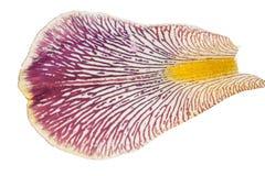 Irisblumenblatt Makro lizenzfreie stockfotografie
