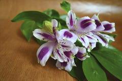 Irisboeket Royalty-vrije Stock Afbeeldingen