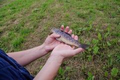 Irische frische Fische Stockfoto