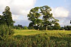 Irische Landschaft Stockfotos