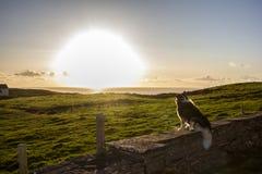 Irische Landschaft mit einem Hund Stockfotos