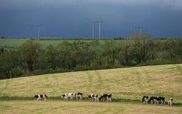 Irische Milchkuh-Wiesenlandschaft Stockbilder