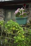 Irischer Fensterkasten lizenzfreie stockfotos