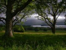 Irischer Wald Stockbild