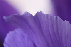 Irise. Foto de Stock