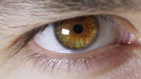 Iriselev som avtalar ultrarapid arkivfilmer