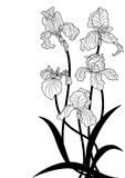 Irises Royalty Free Stock Images