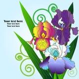 irises stock illustrationer
