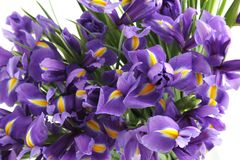 Irises Royalty Free Stock Images
