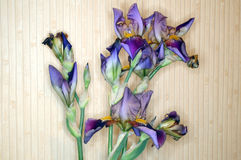 Irises on a beige background Royalty Free Stock Photos