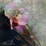 Irises Blumenstrauß stilisiertes Design auf dunklem Hintergrund Lizenzfreie Stockfotografie
