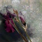 Irises Blumenstrauß stilisiertes Design auf dunklem Hintergrund Lizenzfreie Stockbilder