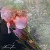 Irises Blumenstrauß stilisiertes Design auf dunklem Hintergrund Stockfotos