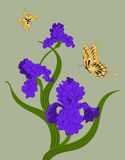 Irises and  butterflies Stock Photo