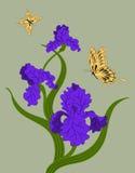 Irises and  butterflies Stock Photo