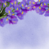 Iris flowers background Stock Images