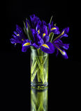 Irises in a glass vase Royalty Free Stock Images