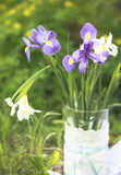 Irises in a glass vase Stock Photography