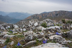 Irises on a hilltop and view of the snowy mountains. Irises on a hilltop and view of the snowy mountains near Jaen, Andalusia, Spain Stock Image