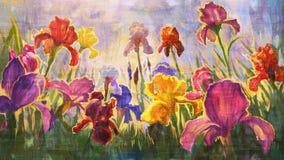 Irises - imitation of oil on canvas. Royalty Free Stock Image