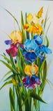 Irises Royalty Free Stock Image
