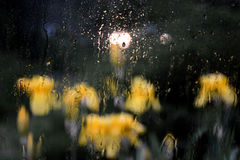 Irises in the rain!. Gleam machines lamps! Amazing view Royalty Free Stock Images
