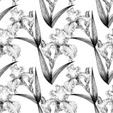Irises. Seamless pattern. Flowers, leaves, stems and buds of irises. Use printed materials, signs, items, websites, maps, posters, postcards, packaging Stock Photos