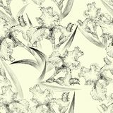 Irises. Seamless pattern. Flowers, leaves, stems and buds of irises. Wallpaper. Irises. Seamless pattern. Flowers, leaves, stems and buds of irises. Use printed Royalty Free Stock Images