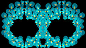 Irises turquoise flowers. two rings. circles of flowers on a black background isolated. Floral composition.  For design. Royalty Free Stock Image