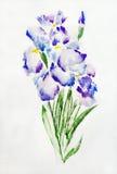 Irises watercolour painting Royalty Free Stock Photos