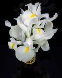 irises white Arkivbilder
